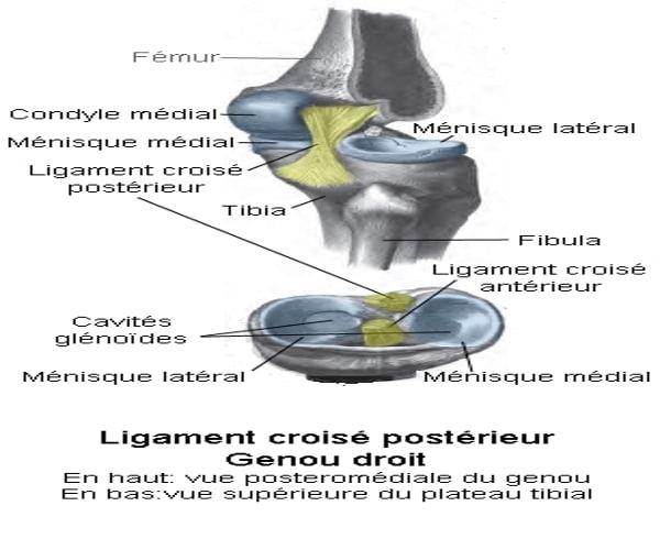 Ligament croisé - laboratoire du skieur1