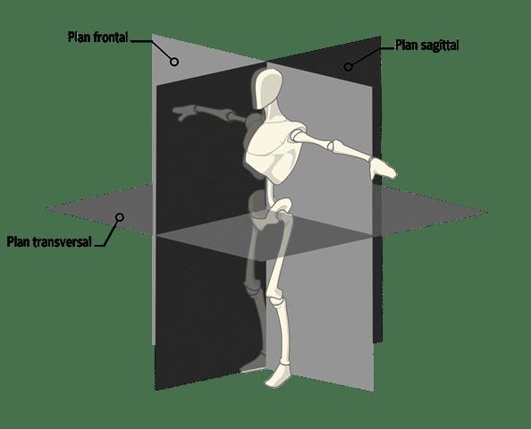 plans transversal-lateral-sagital-labo du skieur