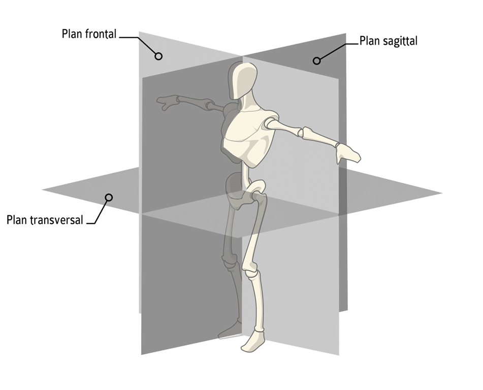 plans-transversal-lateral-sagital